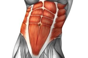 Abdominals Muscles